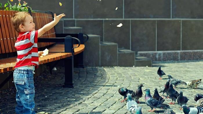 sokak hayvanlarını besleme etkinliği