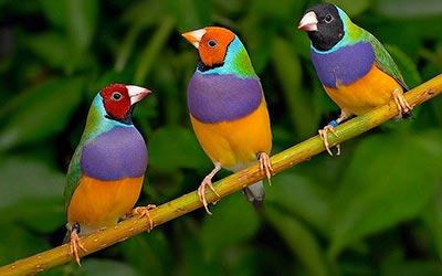kuş sesi