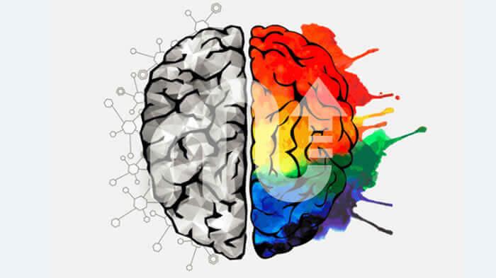 sag beyin sol beyin testi