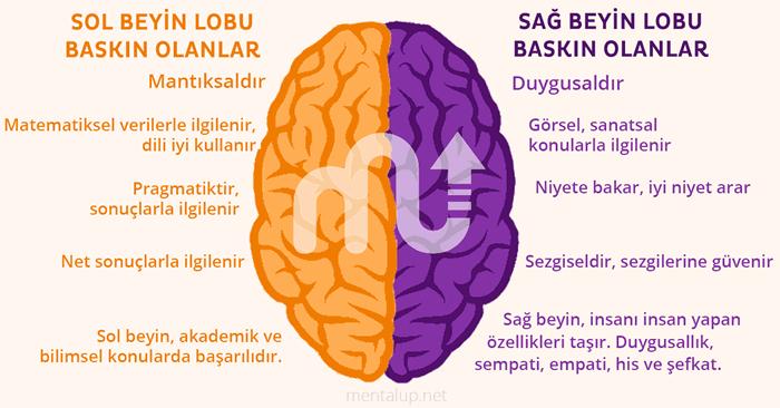 Sağ Beyin-Sol Beyin