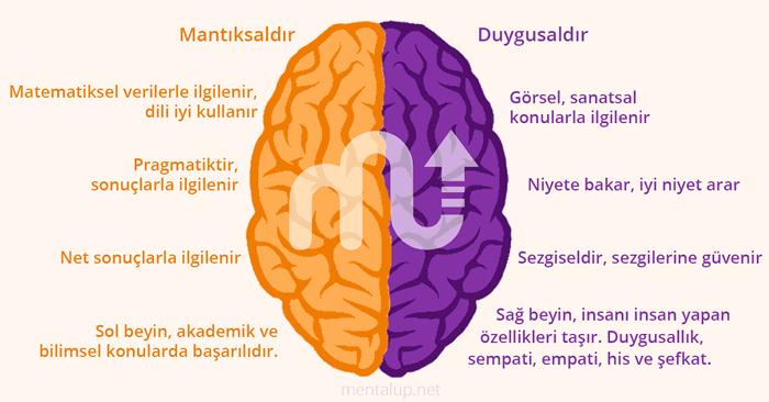 sağ beyin sol beyin